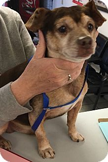 Terrier (Unknown Type, Small) Mix Dog for adoption in Winnsboro, South Carolina - Charlie