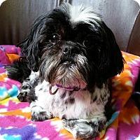 Adopt A Pet :: Millie Montgomery - Urbana, OH
