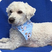 Adopt A Pet :: Sammy-WATCH MY VIDEO!!! - Irvine, CA
