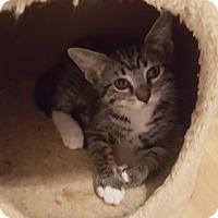 Adopt A Pet :: Fendi (3/13/16) (TH) - Orlando, FL