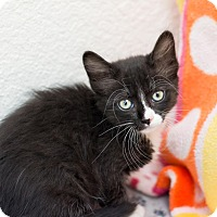 Adopt A Pet :: Mystique - Fountain Hills, AZ
