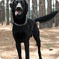 Adopt A Pet :: Branson - Minneola, FL