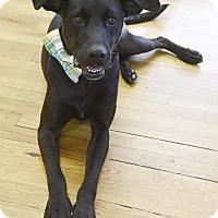 Adopt A Pet :: Landon - PORTLAND, ME