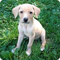 Adopt A Pet :: Raeanne - New Oxford, PA