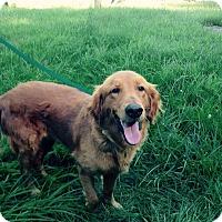 Adopt A Pet :: Kee Kee - Hazard, KY