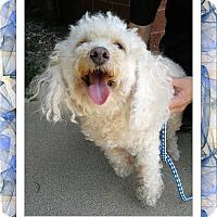 Adopt A Pet :: Finnegan - IL - Tulsa, OK