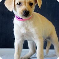 Adopt A Pet :: Andrea - Waldorf, MD