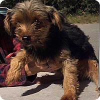 Adopt A Pet :: Jacie! *Adoption Pending!* - New York, NY