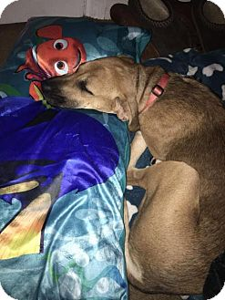 Black Mouth Cur/Shepherd (Unknown Type) Mix Dog for adoption in Willingboro, New Jersey - Harley Girl