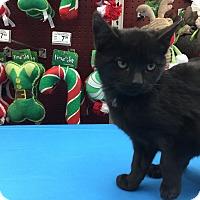 Adopt A Pet :: Diesel - Cincinnati, OH