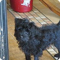 Adopt A Pet :: Raisin - San Antonio, TX