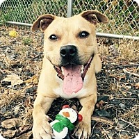Adopt A Pet :: Ginger - Newark, DE