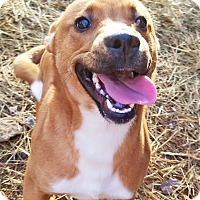 Adopt A Pet :: Spaz - Kingston, TN