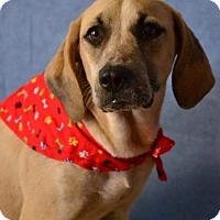Adopt A Pet :: Sandy - Okeechobee, FL