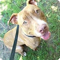 Adopt A Pet :: Sativa - Glendale, AZ