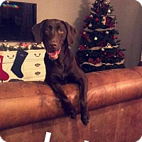 Adopt A Pet :: Loula - Mesa, AZ