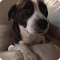 Adopt A Pet :: Sparky - cicero, NY
