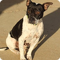 Adopt A Pet :: Val - Lafayette, IN