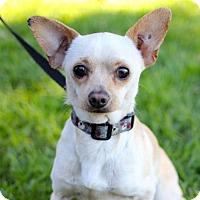 Adopt A Pet :: Prescot - San Diego, CA