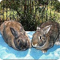 Adopt A Pet :: Nala & Simba - Phoenix, AZ