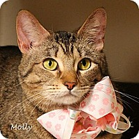 Adopt A Pet :: Molly - Kerrville, TX