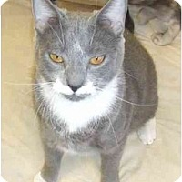 Adopt A Pet :: Sampson (aka Mustachio) - Lake Charles, LA