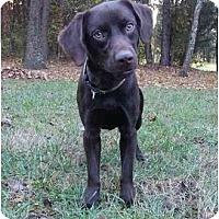 Adopt A Pet :: Rudy - Mocksville, NC