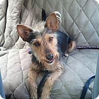 Adopt A Pet :: Ruby - Seattle, WA