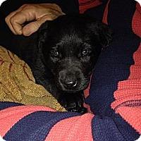 Adopt A Pet :: Dora - Winchester, VA