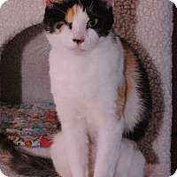Adopt A Pet :: Lavender - Middletown, NY