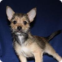 Adopt A Pet :: Bandit - Winters, CA