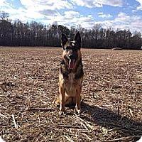Adopt A Pet :: Blitz (Courtesy Post) - Leonardtown, MD