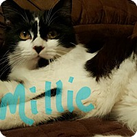 Adopt A Pet :: Millie - Pineville, NC