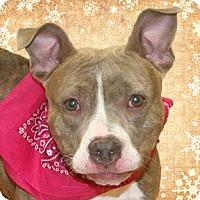 Adopt A Pet :: Avis - Cincinnati, OH