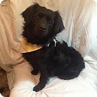 Adopt A Pet :: Capi - San Diego, CA