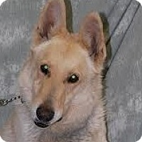Adopt A Pet :: Kanye - Baltimore, MD
