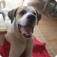 Adopt A Pet :: Noah - Enfield, CT