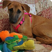Adopt A Pet :: 'BROWNIE' - Agoura Hills, CA