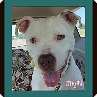 Adopt A Pet :: Migsy - Memphis, TN