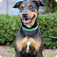 Adopt A Pet :: Spencer - San Diego, CA