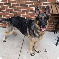 German Shepherd Dog Mix Dog for adoption in Livonia, Michigan - Ryder
