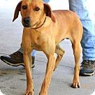 Adopt A Pet :: Quentin