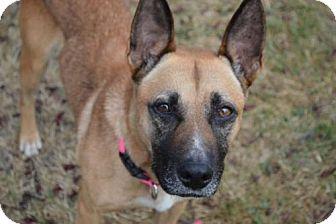 German Shepherd Dog/Australian Cattle Dog Mix Dog for adoption in Washougal, Washington - Haven