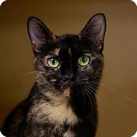 Adopt A Pet :: Lark - Kettering, OH