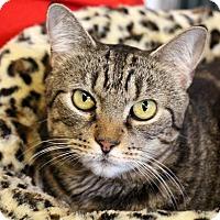 Adopt A Pet :: Shumara - Sarasota, FL