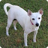 Adopt A Pet :: KINLEY - richmond, VA