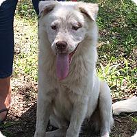 Adopt A Pet :: Herbie - see video - Stamford, CT