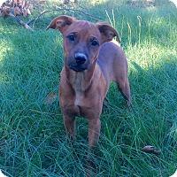 Adopt A Pet :: MJ - Plano, TX