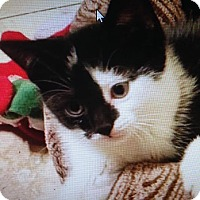 Adopt A Pet :: Harley Quinn - East Brunswick, NJ