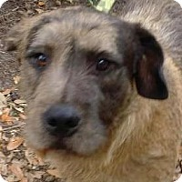 Adopt A Pet :: Jett - Orlando, FL